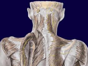 Permalink to Chiropractic Sinus Adjustment